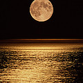 Moonrise by David Nunuk