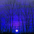 Moonrise by Marie Jamieson
