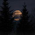 Moonset In The Spruce Bog by Susan Capuano