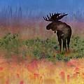 Moose On The Tundra by Carolyn Doe