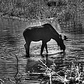 Moose Silhouette by One Rude Dawg Orcutt