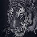 Moquito El Tigre by Yenni Harrison