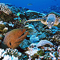 Moray Eel On A Reef by Alexis Rosenfeld
