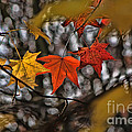 More Autumn Leaves by Jeff Breiman