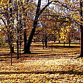 More Fall Trees by Stephanie Moore