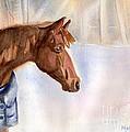 Morgan by Maria's Watercolor