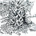 Morikami Gardens' Tree Boca Raton Florida  by Robert Birkenes