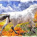 Morisco In Spring Flowers by Vicki Podesta