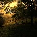 Morning Breaks Softly by Nina Fosdick