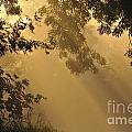 Morning Fog by Sharon Talson