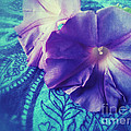 Morning Glories On Paisley by Ruby Hummersmith