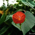 Morning Glory Fractal by Ericamaxine Price