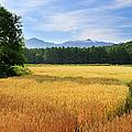 Morning In Hokkaido by Frank Chen