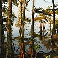 Morning In The Swamps by Robert Brown