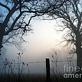 Morning Mist by Michelle Hawk