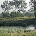 Morning Mist On Marsh by Dennis Leatherman