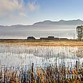 Morning Mists Of Cutler Marsh - Utah by Gary Whitton