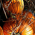 Morning Pumpkins by Susan Herber