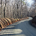 Morning Shadows On The Forest Road by Ausra Huntington nee Paulauskaite