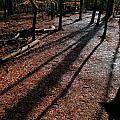 Morning Shadows by Rrrose Pix