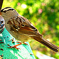 Morning Sparrow II by Debbie Portwood