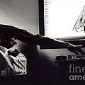 Morning Stretch by Christina Moreno