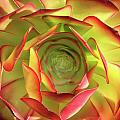 Morning Succulent by Melanie Rainey