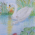 Morning Swim I  Original Colored Pencil Drawing by Debbie Portwood