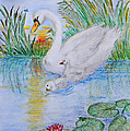 Morning Swim II  Edited Original Art by Debbie Portwood