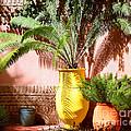 Moroccan Garden by Susan Wall