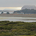 Morro Rock From The Elfin Forest by Heidi Smith