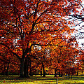 Morton Arboretum In Colorful Fall by Paul Ge