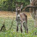 Mosaic - Donkey by Ericamaxine Price