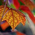 Mosaic Autumn by Melanie Moraga