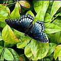 Mosaic Flutterby by Sheri Bartoszek