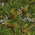 Moss And Lichen by Daniel Reed