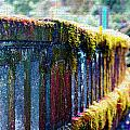 Moss Covered Bridge by Marie Jamieson