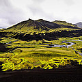 Moss In Iceland by Tom and Pat Cory