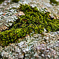 Moss In The Middle by Susan Herber