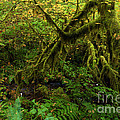 Moss In The Rainforest by Adam Jewell