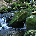Moss Overflow by Neal Eslinger