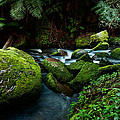 Moss Rocks by Heather Thorning