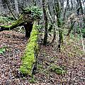 Mossey Log by Michael Waters