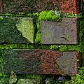 Mossy Brick Wall by Carol Ailles