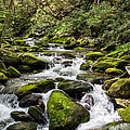 Mossy Creek by Ronald Lutz