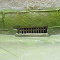 Mossy Grate by Christophe Ennis