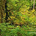 Mossy Rainforest by Adam Jewell