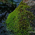 Mossy River Rock by Susan Herber