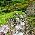 Mossy Rock Garden by Lizi Beard-Ward