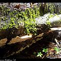 Mossy Waterfall On Mushroom Rock by Rebecca Stephens